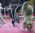 Цирк Ю.Никулина